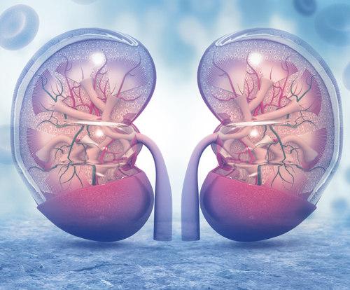 5 Maggio: convegno ANTO sul trapianto di rene